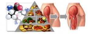 aminoacidos1-300x113 Aminoácidos o BCAA ¿Qué son y para qué sirven? (II) Listado