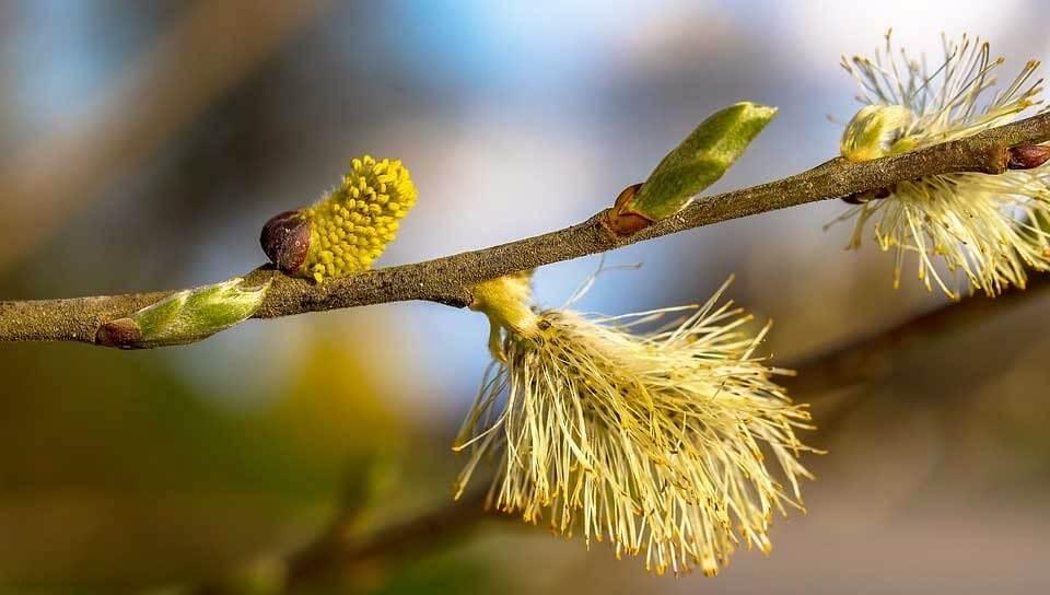 alergia-de-primaveral ¡Cuídate y da la bienvenida a la primavera!