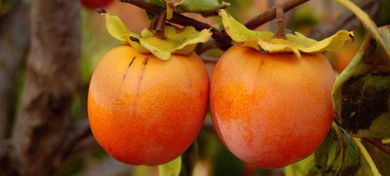 la-fruta-de-kaki Kaki: una fruta con muchas virtudes