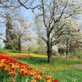 La primavera, combate el cansancio y las alergias